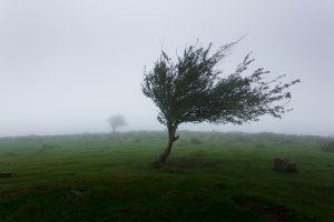 Um temporal – Toninho Aribati