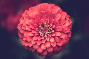 Uma flor – Toninho Aribati
