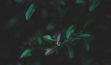 A molecada do Samuca e sua selva